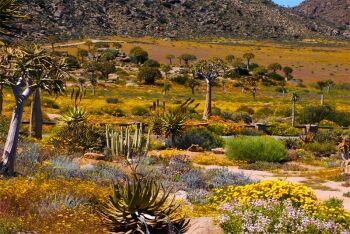 Hester Malan Wild Flower Garden Goegap Nature Reserve Namaqualand